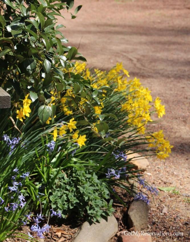 GotMyReservations Atlanta History Center Daffodils