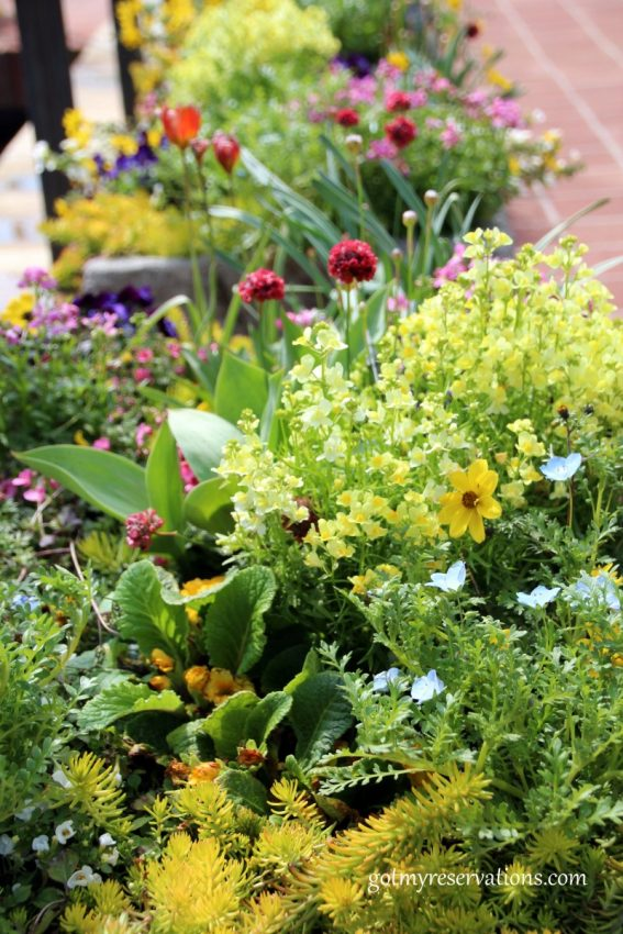 The entryway planters are full of spring plantings in shades of yellow.